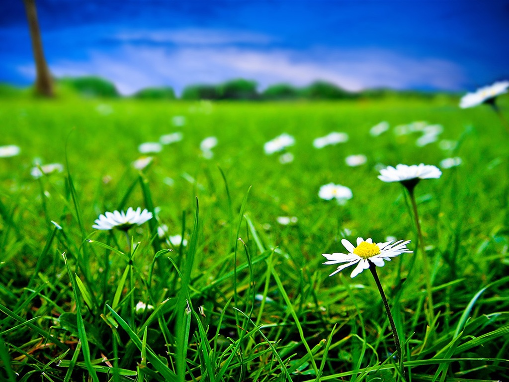 Download Wallpaper 1024x768 Green grass and white flowers ...