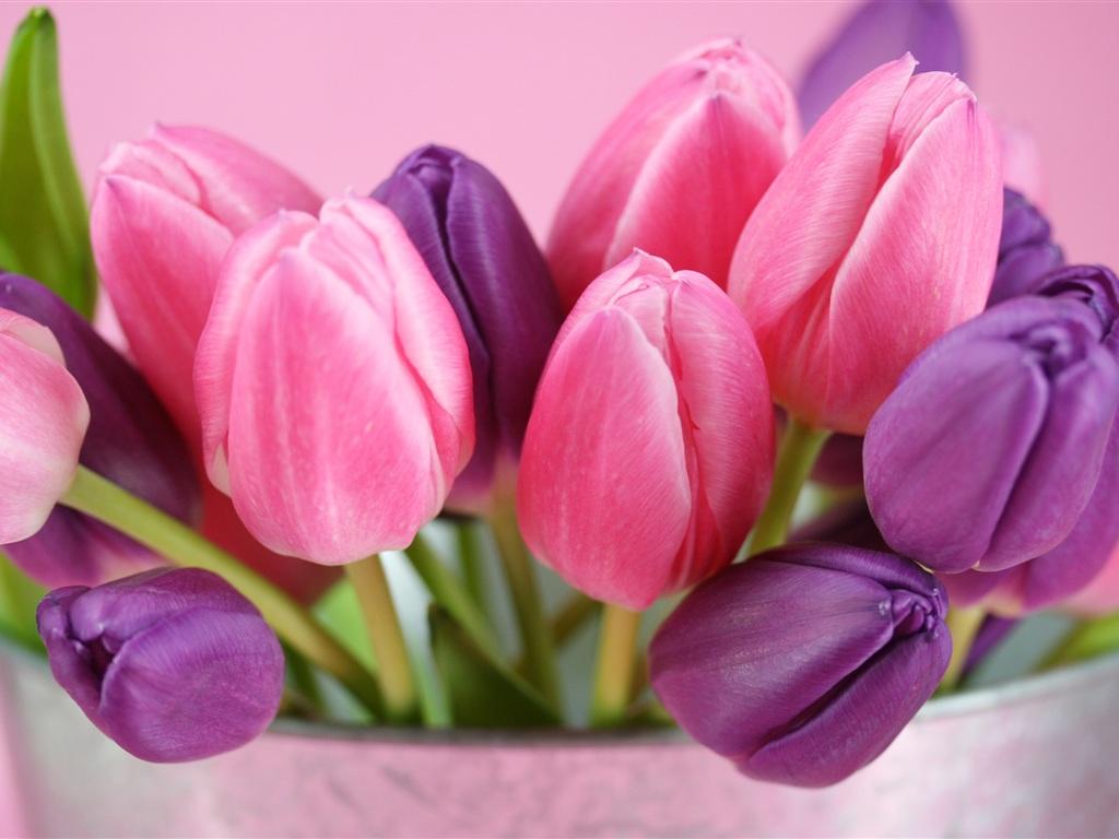 Фиолетовые тюльпаны цветы обои 1024x768