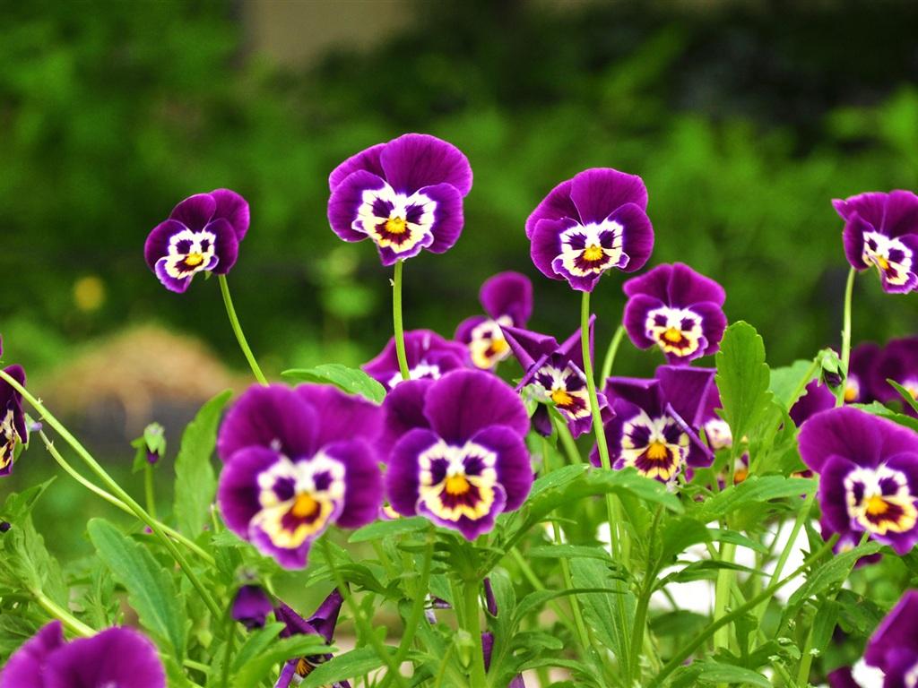 Purple flowers wallpaper 1024x768 wallpaper download green leaves