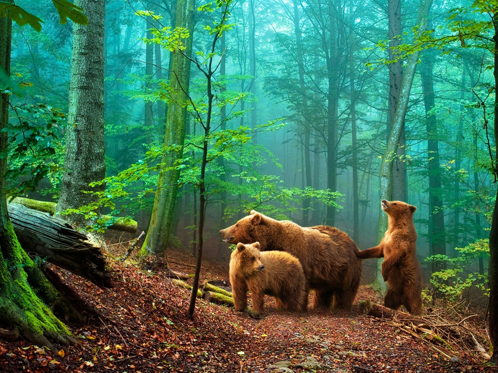 緑の森林の中にいる茶色い熊