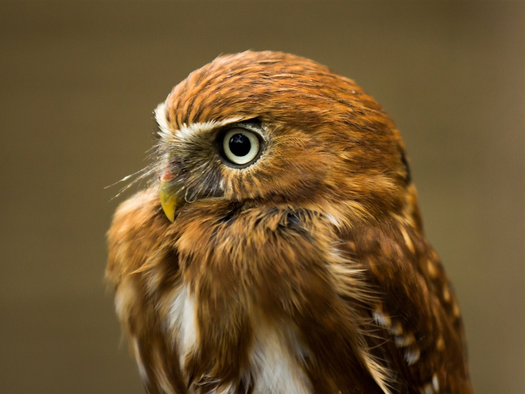 フクロウの画像 p1_27