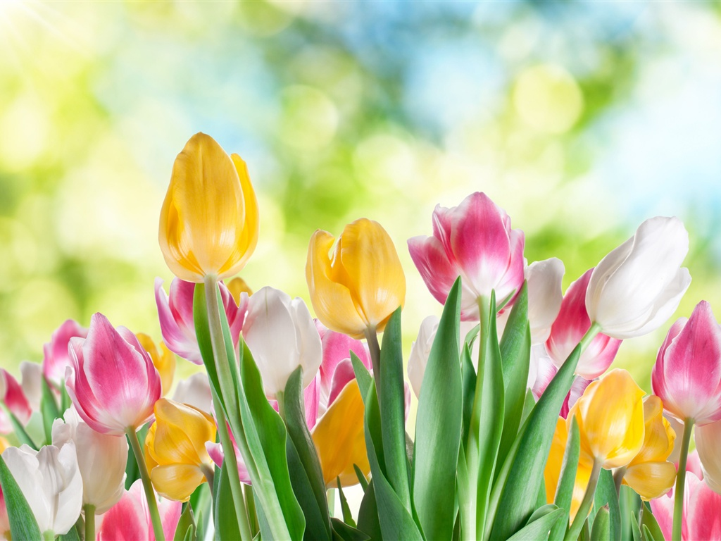 tulips flowers varicoloured bright bouquet yellow red white pink