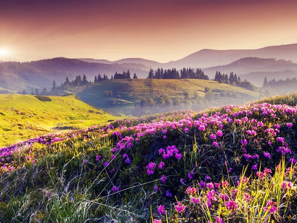 Nature printemps, les collines, les fleurs, les arbres, le soleil Fonds d'écran - 1024x768