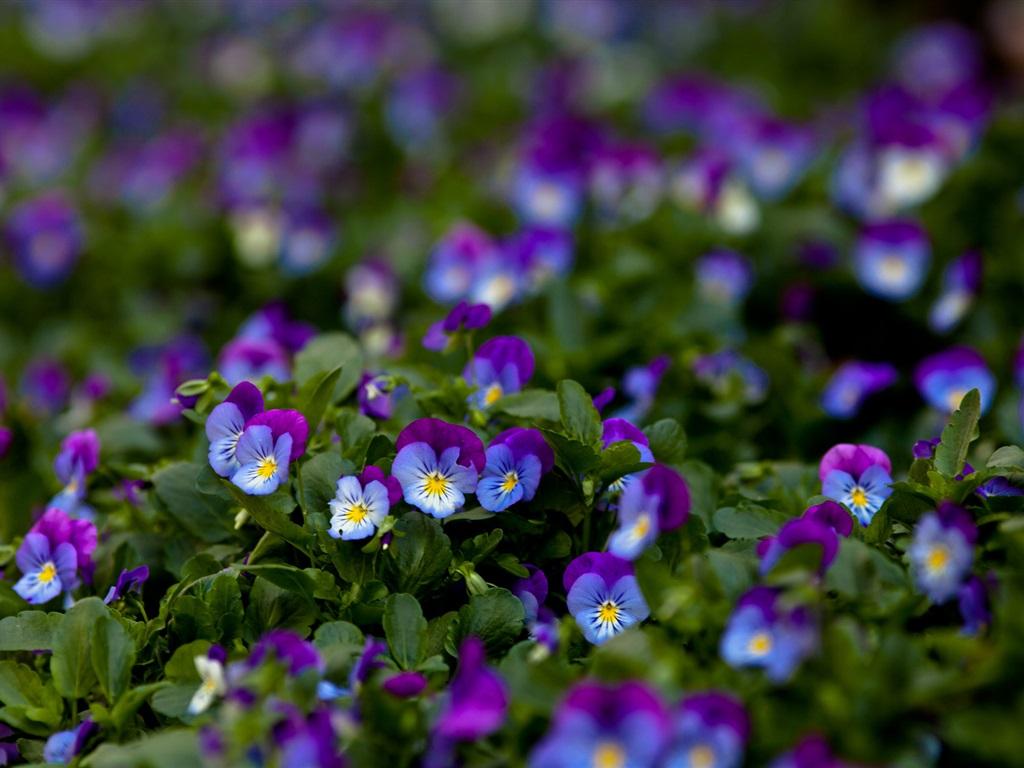 green leaves purple flowers - photo #15