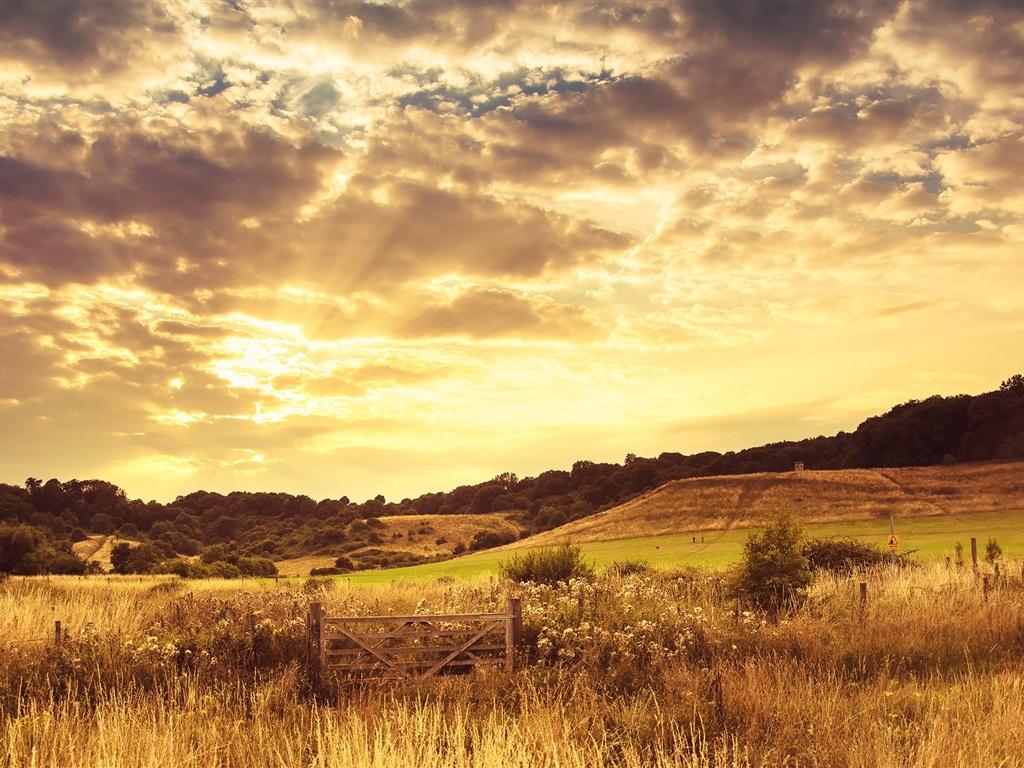 따뜻한 일몰 풍경, 황혼, 구름, 나무, 잔디, 울타리 배경 화면 ...