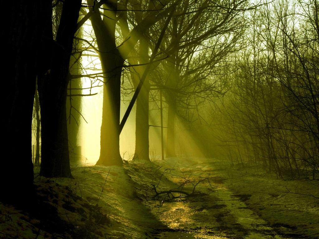 Forêt, les arbres, la fonte des neiges, les rayons du soleil, le printemps Fonds d'écran - 1024x768