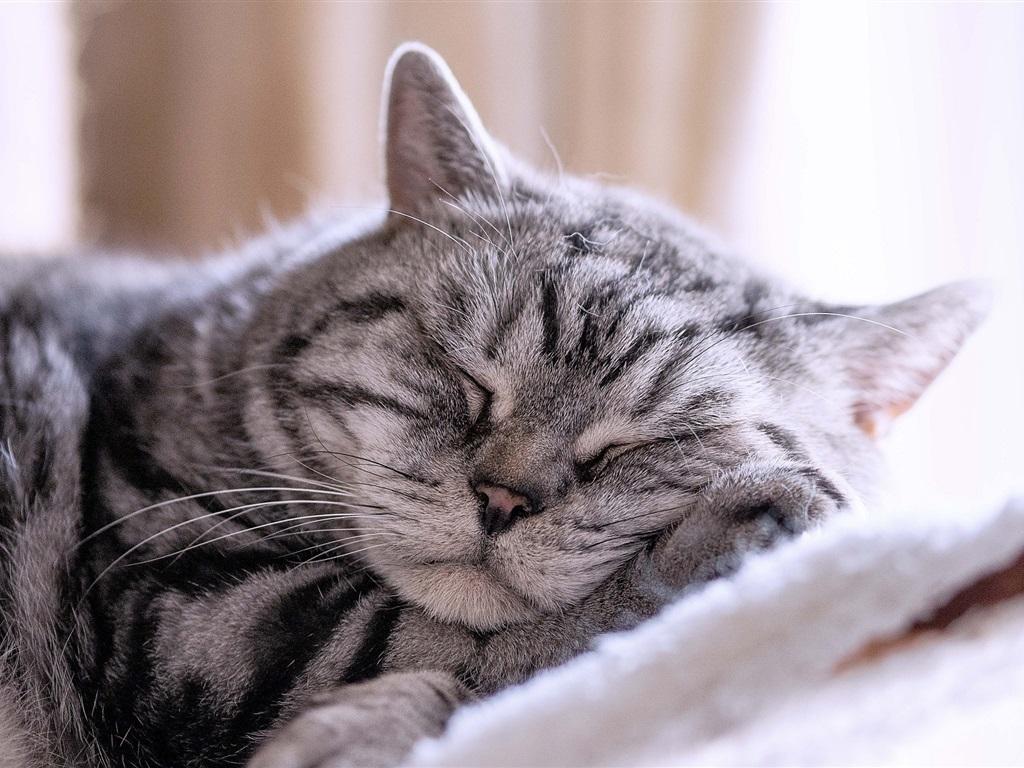 картинки про спящих котиков протяжении