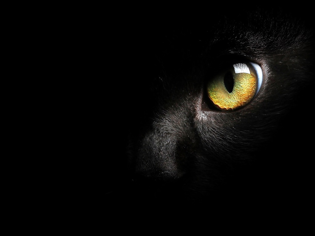 Yellow Sea Location Wallpaper Black cat fa...