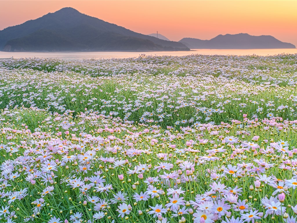wallpaper mountains  river  wild flowers  spring  morning