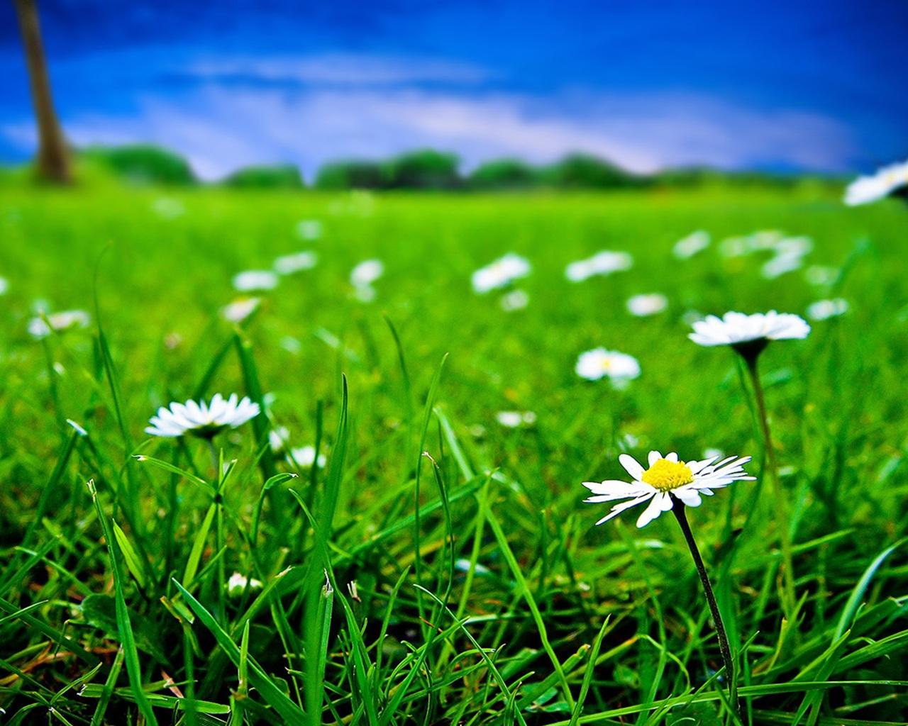 трава бесплатно