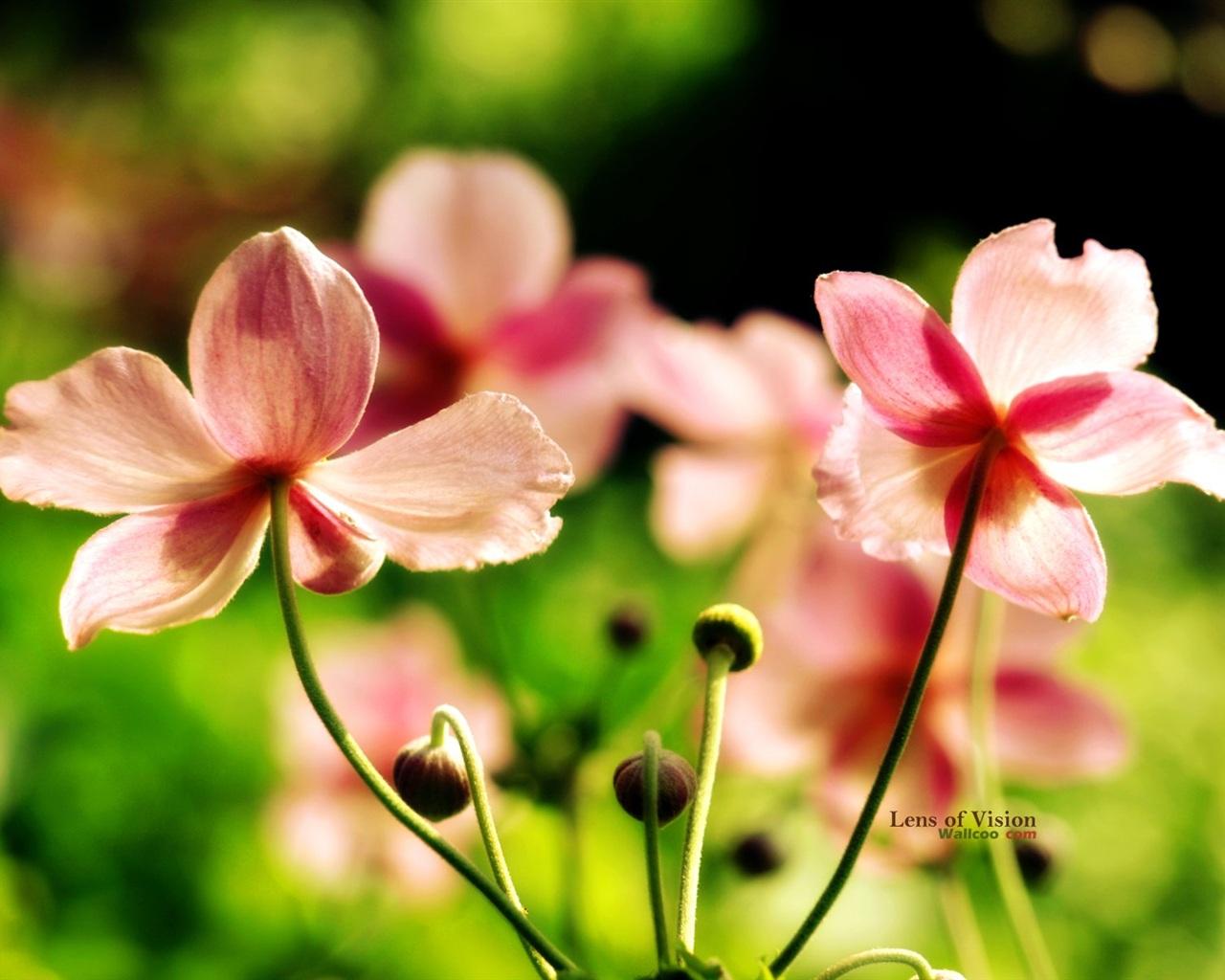 Цветы розовые полевые цветы обои 1280x1024
