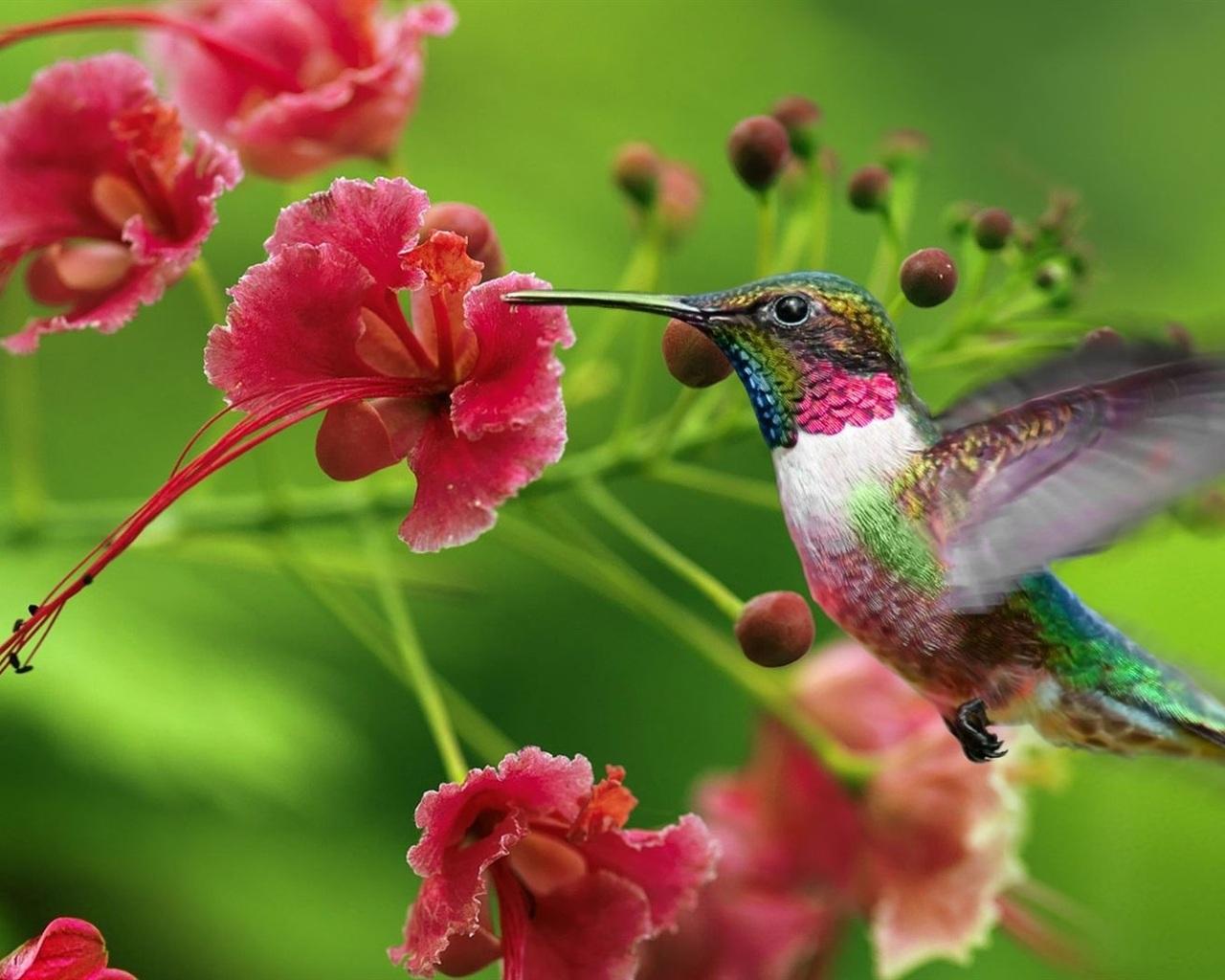 Download hintergrundbilder 1280x1024 kolibri blumen for Fliegen in blumen