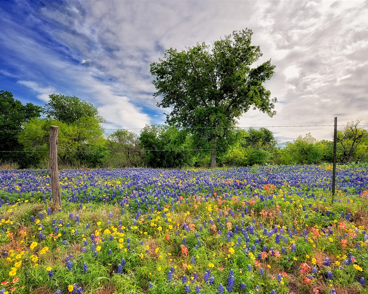 pictures of landscapes wildflowers wallpaper 1280x1024 resolution 11342
