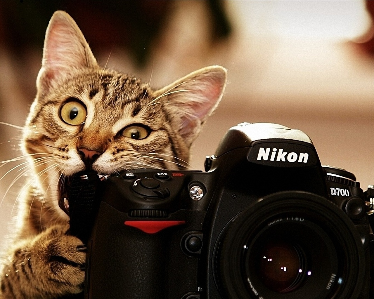Cats also use the camera Wallpaper | 1280x1024 resolution