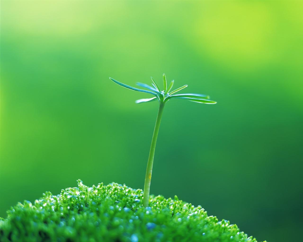 壁纸 春天的绿芽 1920x1200 HD 高清壁纸, 图片, 照片