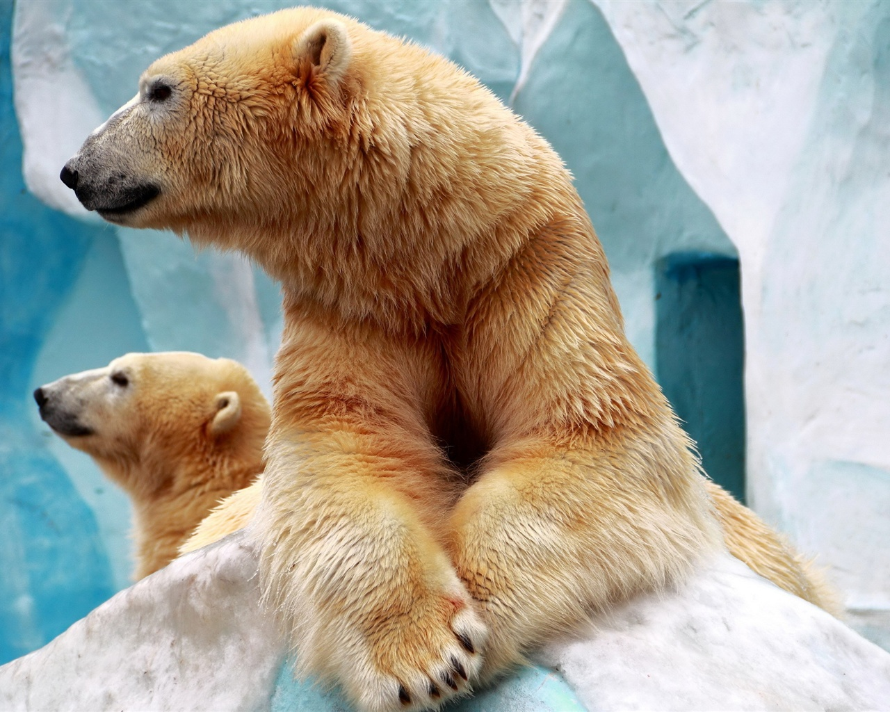 Two polar bears wallpaper - 1280x1024