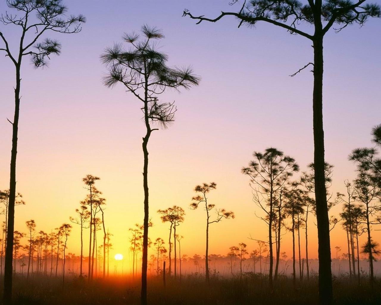 Обои восход, ёлки, утро. Природа foto 18
