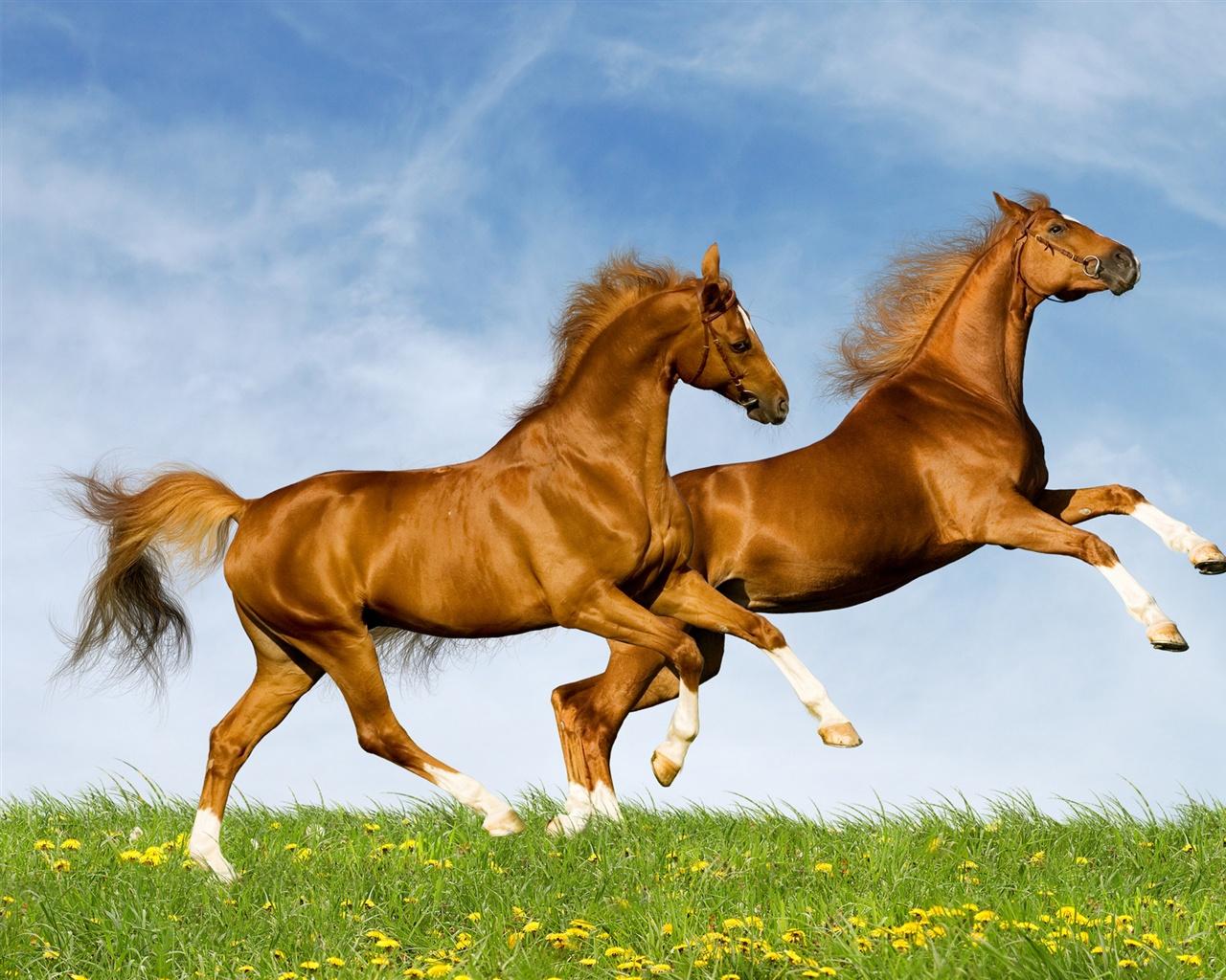 hintergrundbilder pferde 1280 x - photo #10