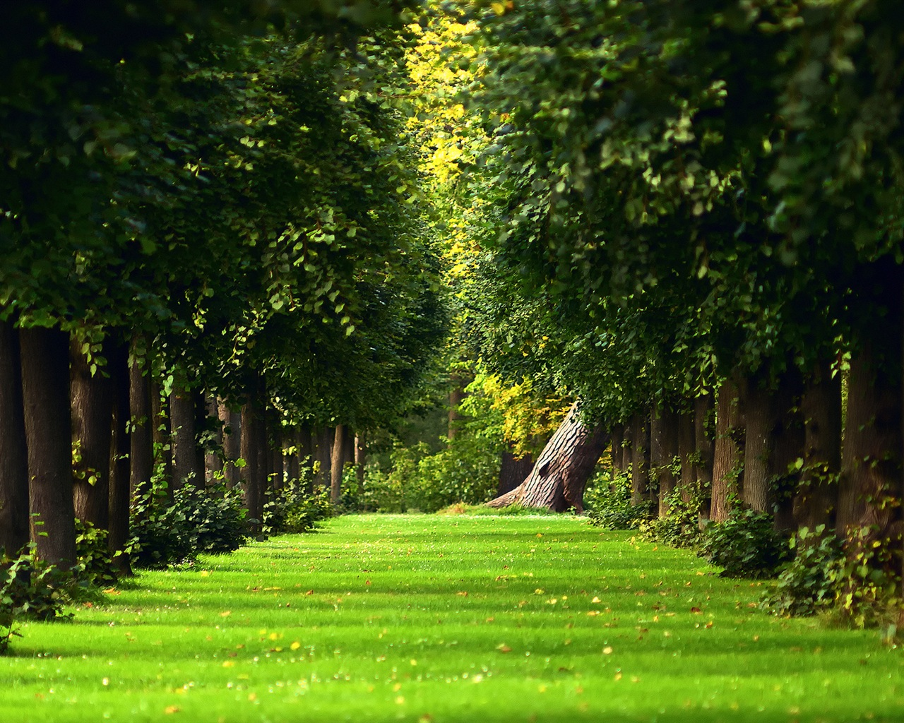 Natural Grass Wallpaper green grass path wallpaper
