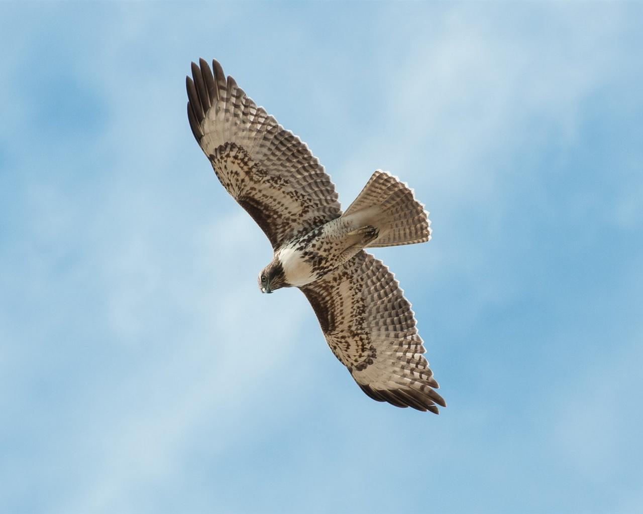 Fonds d 39 cran un oiseau qui vole dans le ciel bleu 1920x1200 hd image - Jeux d oiseau qui vole ...