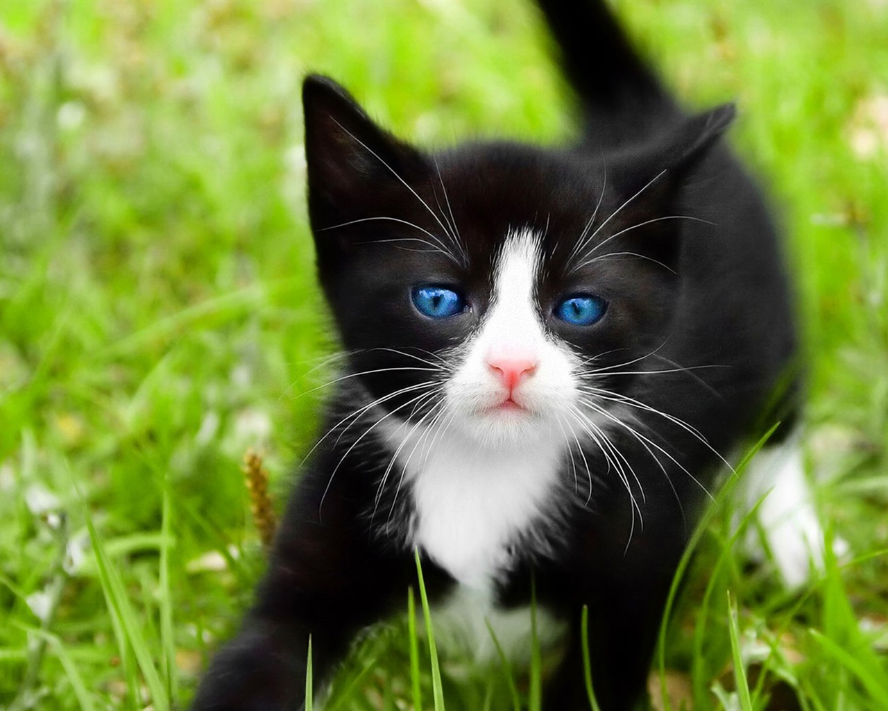 Wallpaper Black Cat Blue Eyes 1920x1200 Hd Picture Image