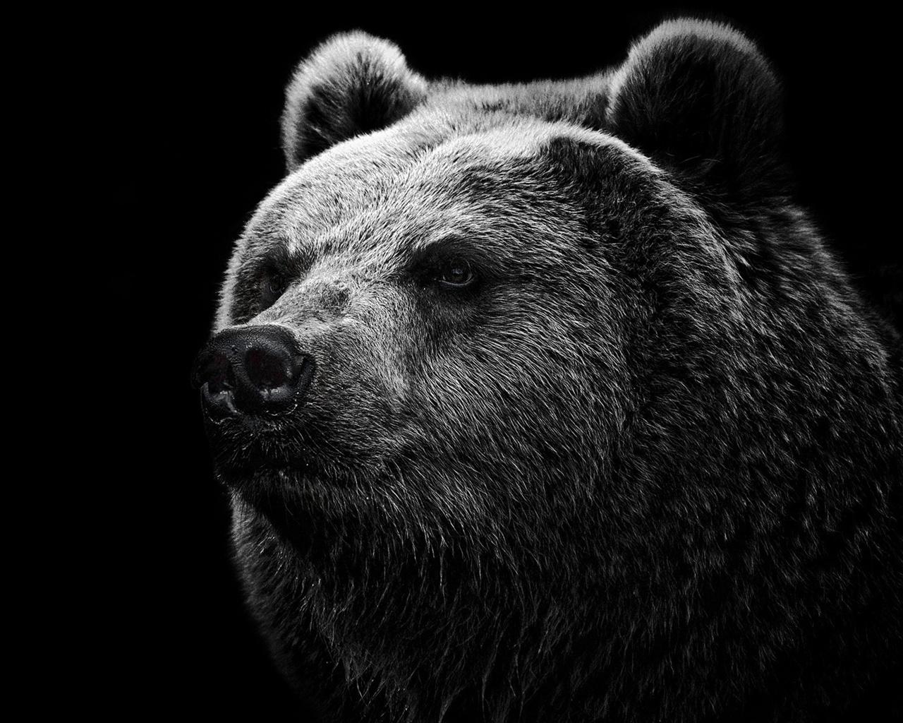 壁紙 黒い背景黒クマ 1920x1200 HD 無料のデスクトップの背景, 画像