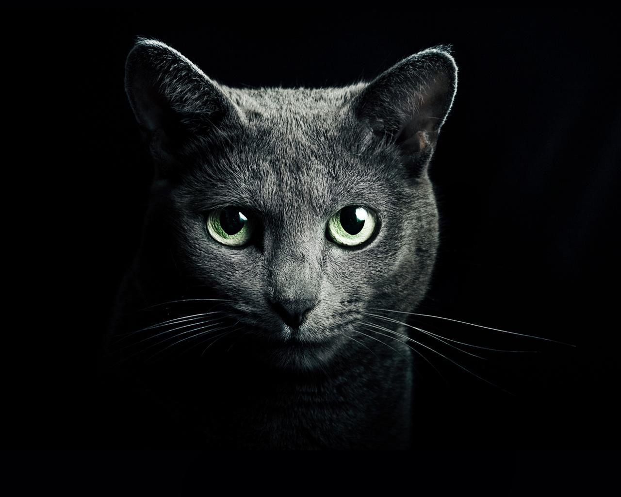 壁纸 黑猫,绿眼睛,黑色的背景 2560x1920 HD 高清壁纸, 图片, 照片