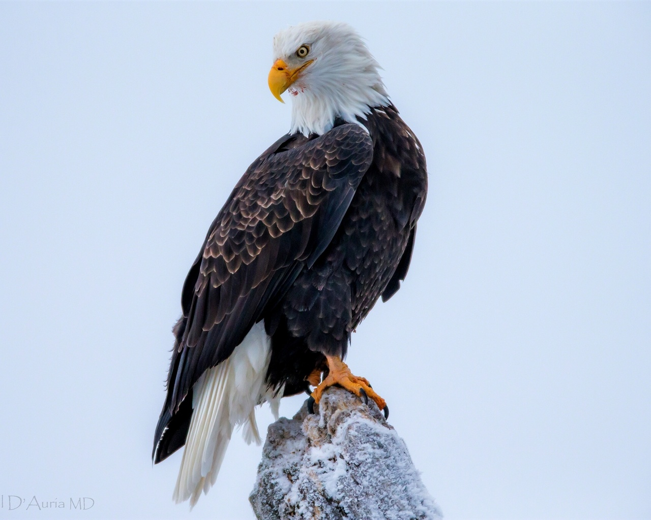 eagle 1280x1024 wallpaper - photo #1
