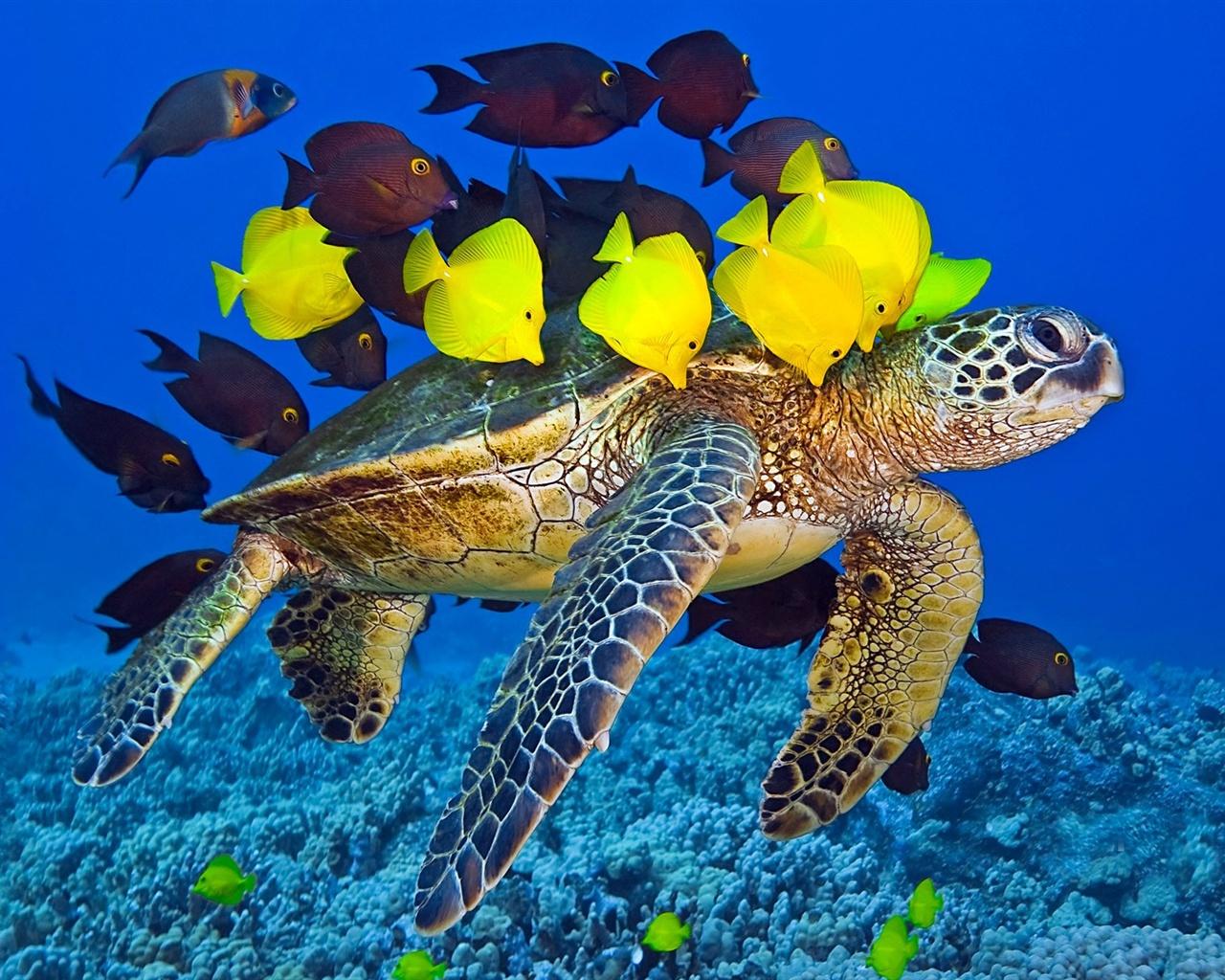ウミガメの画像 p1_36