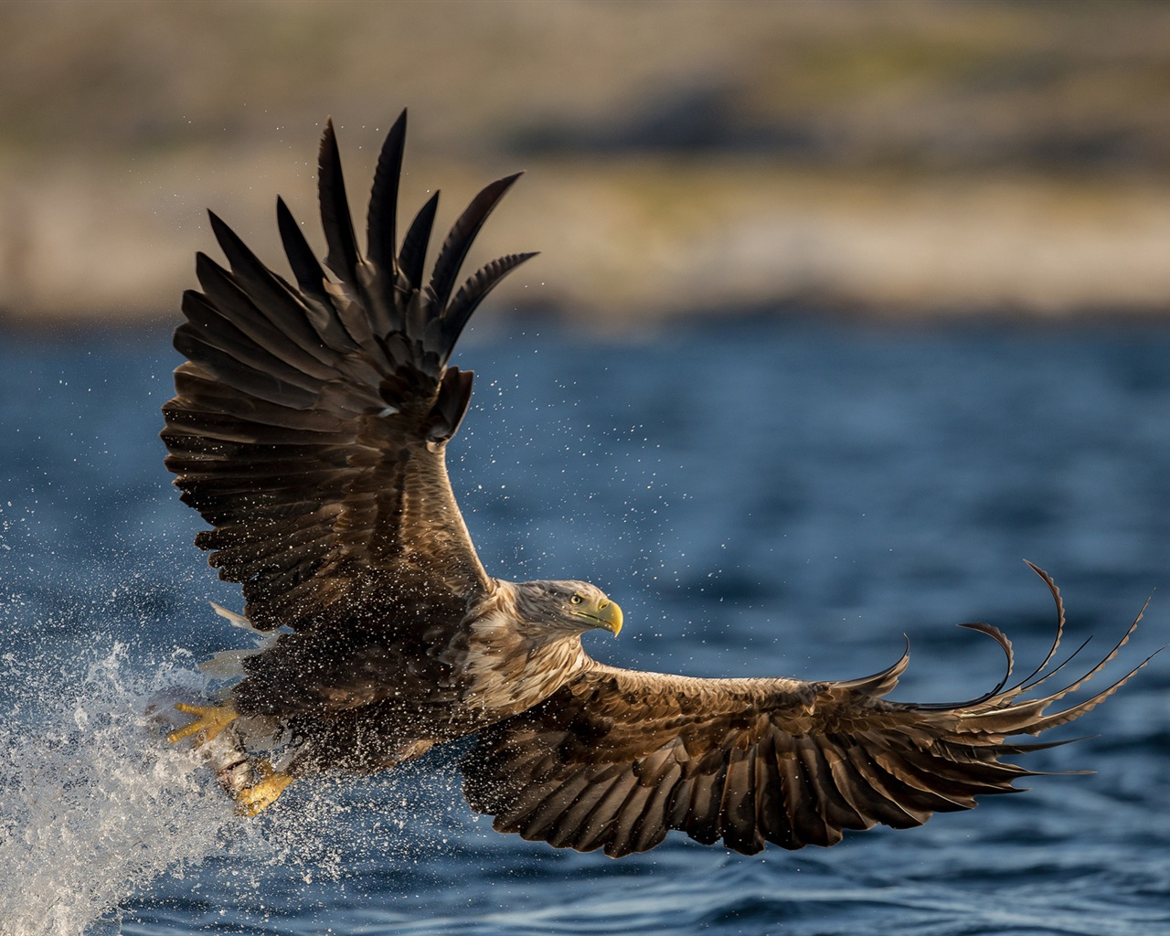 eagle 1280x1024 wallpaper - photo #21