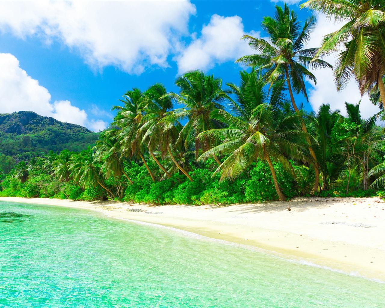 Fonds d'écran Tropical, paradis, plage, côte, mer, palmiers, été 2560x1600 HD image