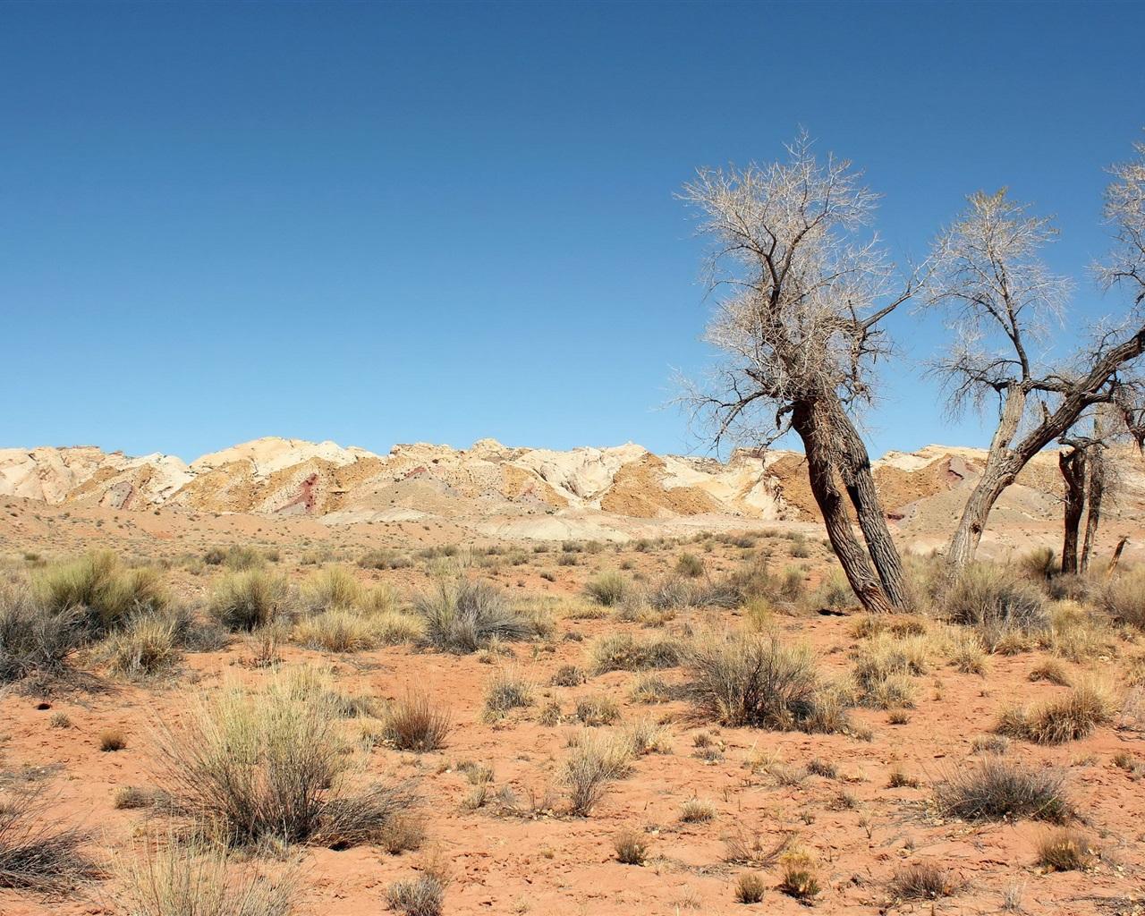 download wallpaper 1280x1024 desert trees grass sky hd. Black Bedroom Furniture Sets. Home Design Ideas