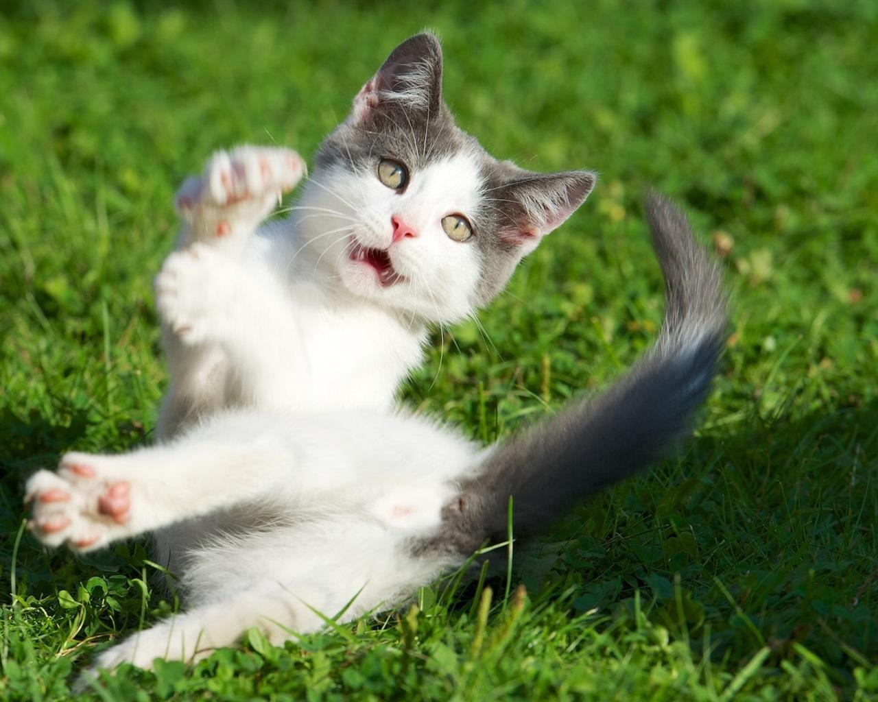 小猫惊讶的表情,草 壁纸图片