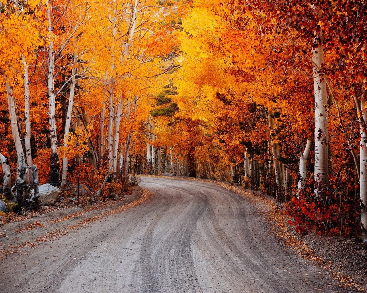Birch rote bl 228 tter herbst stra 223 e hintergrundbilder 1280x1024
