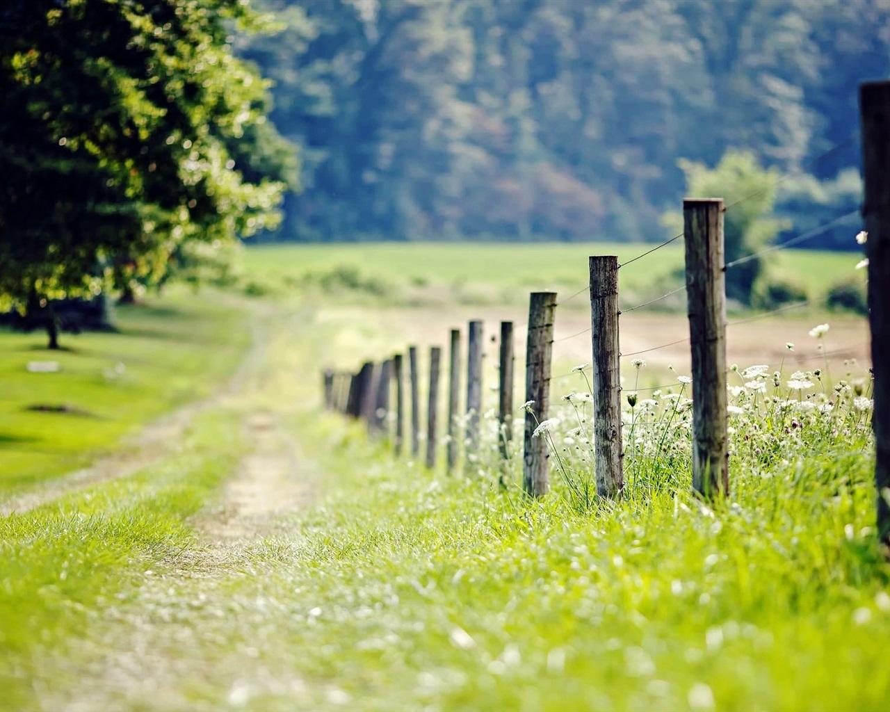 자연, 울타리, 초원, 잔디, 나무 배경 화면  1280x1024 배경 화면 ...