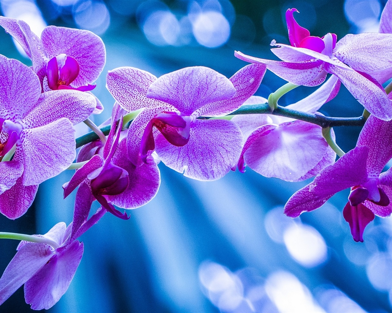 phalaenopsis orchid wallpapers pictures - photo #25