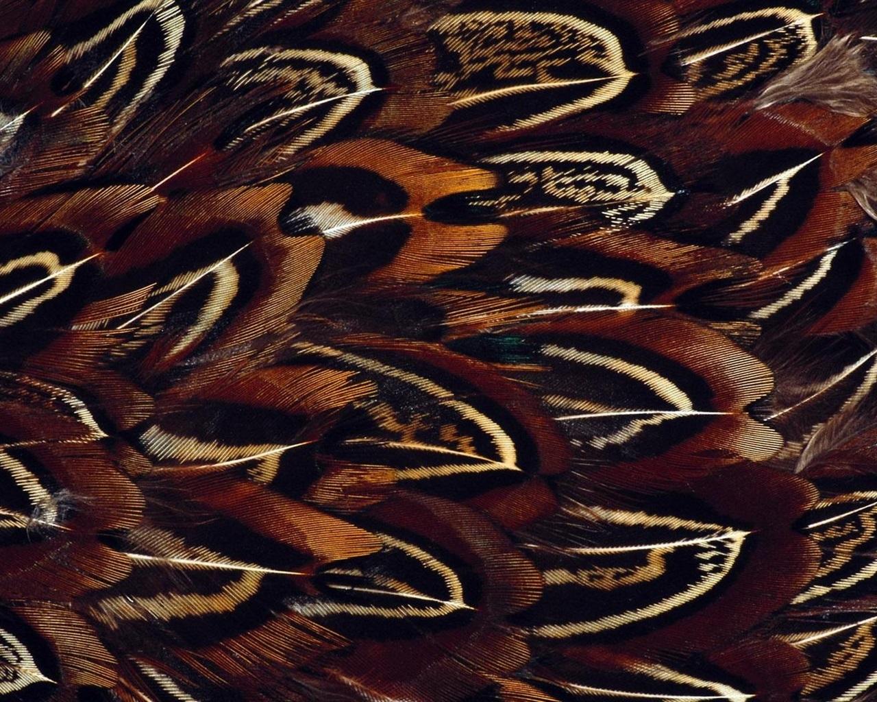 Bird Feathers Macro Photography Wallpaper