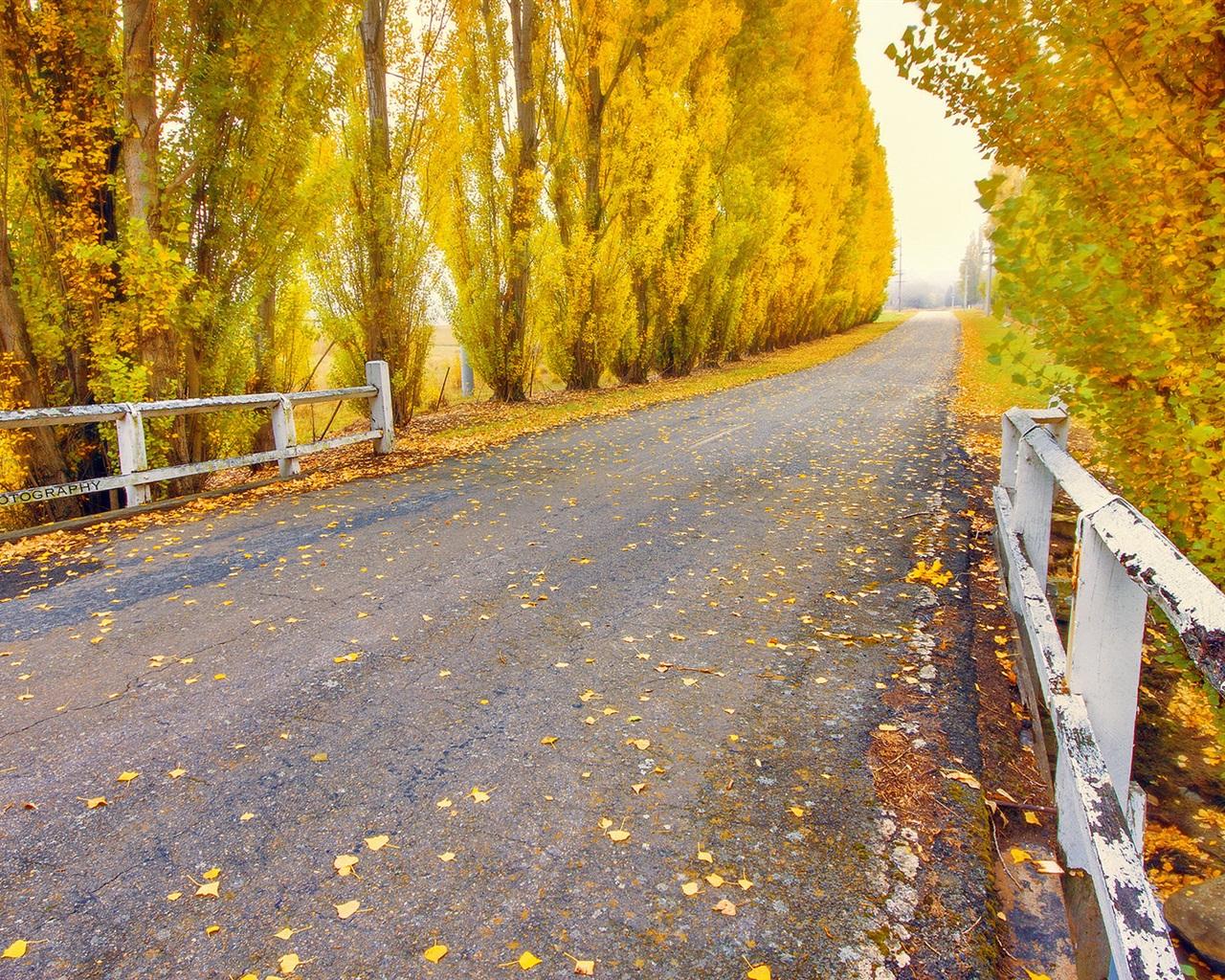 Обои желтые, асфальт, осень. Природа foto 18