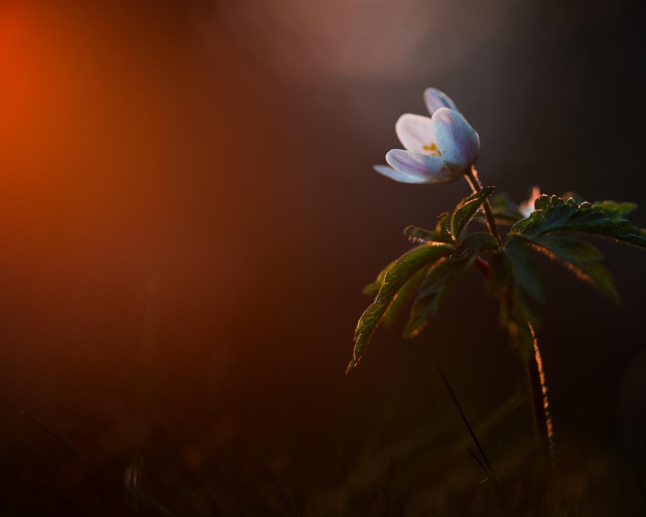 Fondos De Pantalla Flor Azul, Hojas, Fondo Oscuro