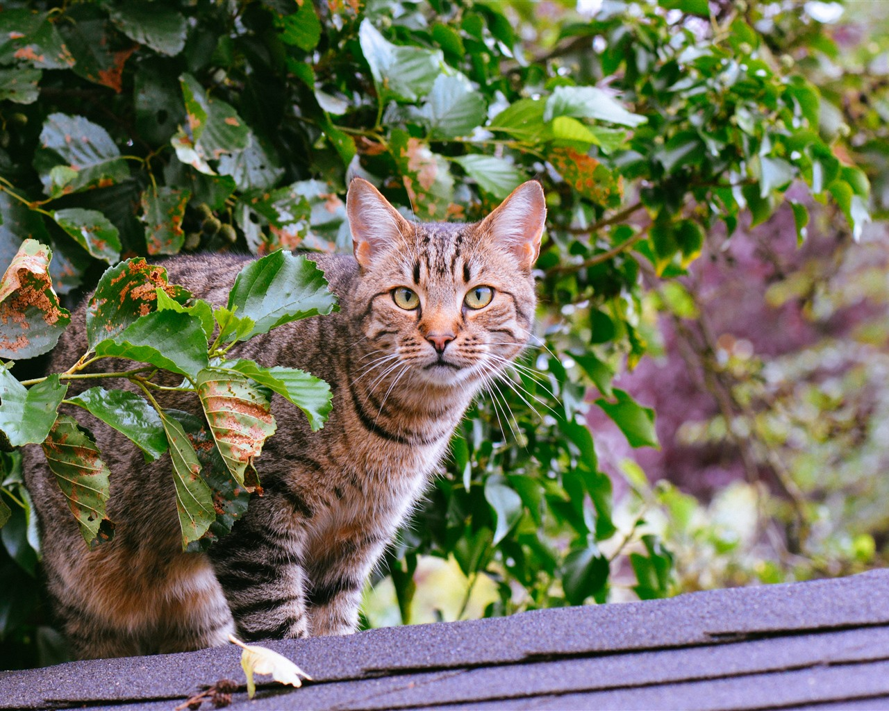 Wallpaper Cat Look, Green Leaves 5120x2880 UHD 5K Picture