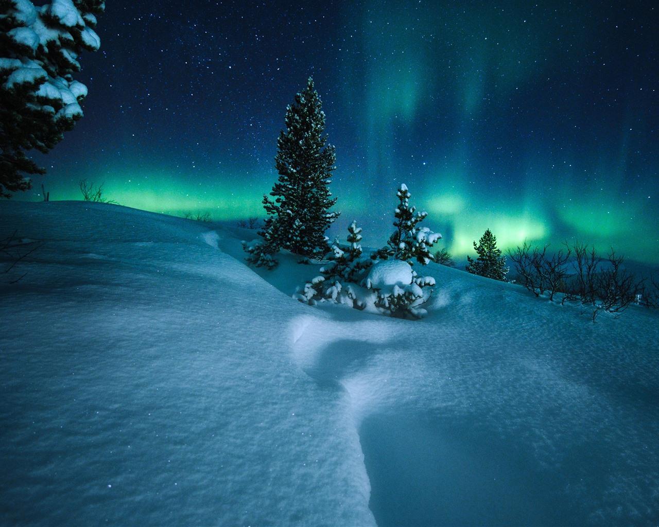 壁纸 北极光,挪威,树木,雪,星空,夜晚 2880x1800 HD 高清壁纸, 图片, 照片