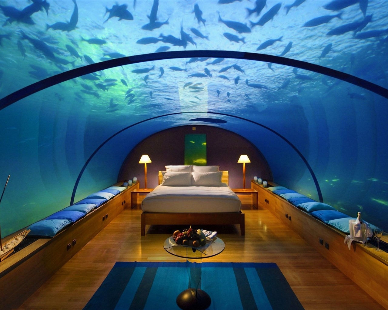 Wallpaper Bedroom Underwater Fish Glass 2560x1600 Hd Picture Image
