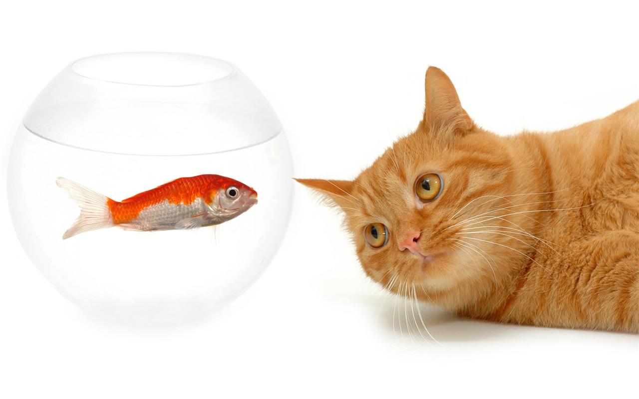 猫と魚の視覚上 壁紙 1280x800 壁紙ダウンロード JA