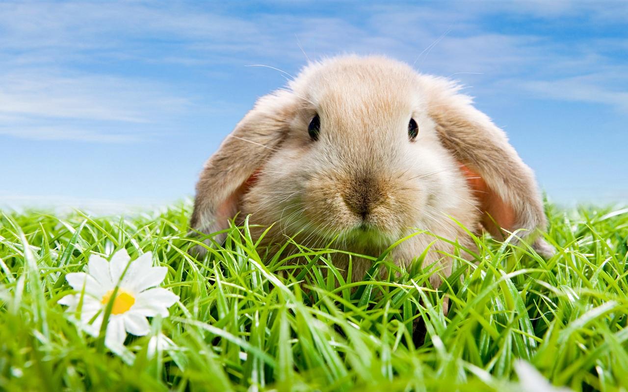 ウサギの画像 p1_28