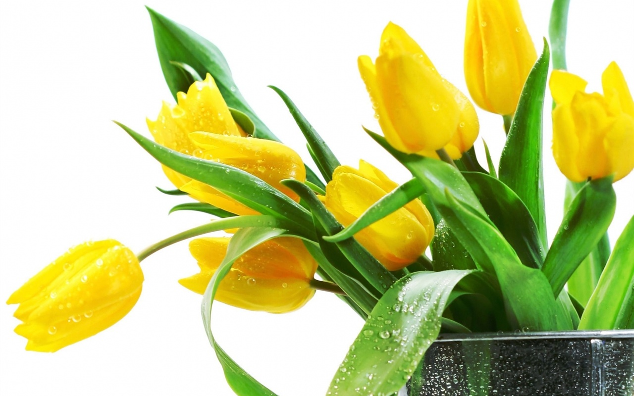 Beautiful Tulips Flowers Images Beautiful Flower Image
