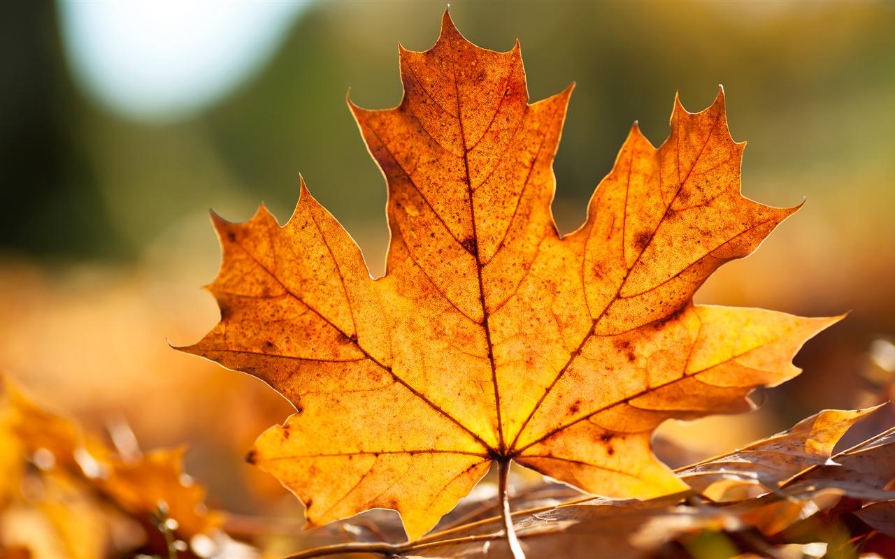 Resultado de imagen de hoja otoño