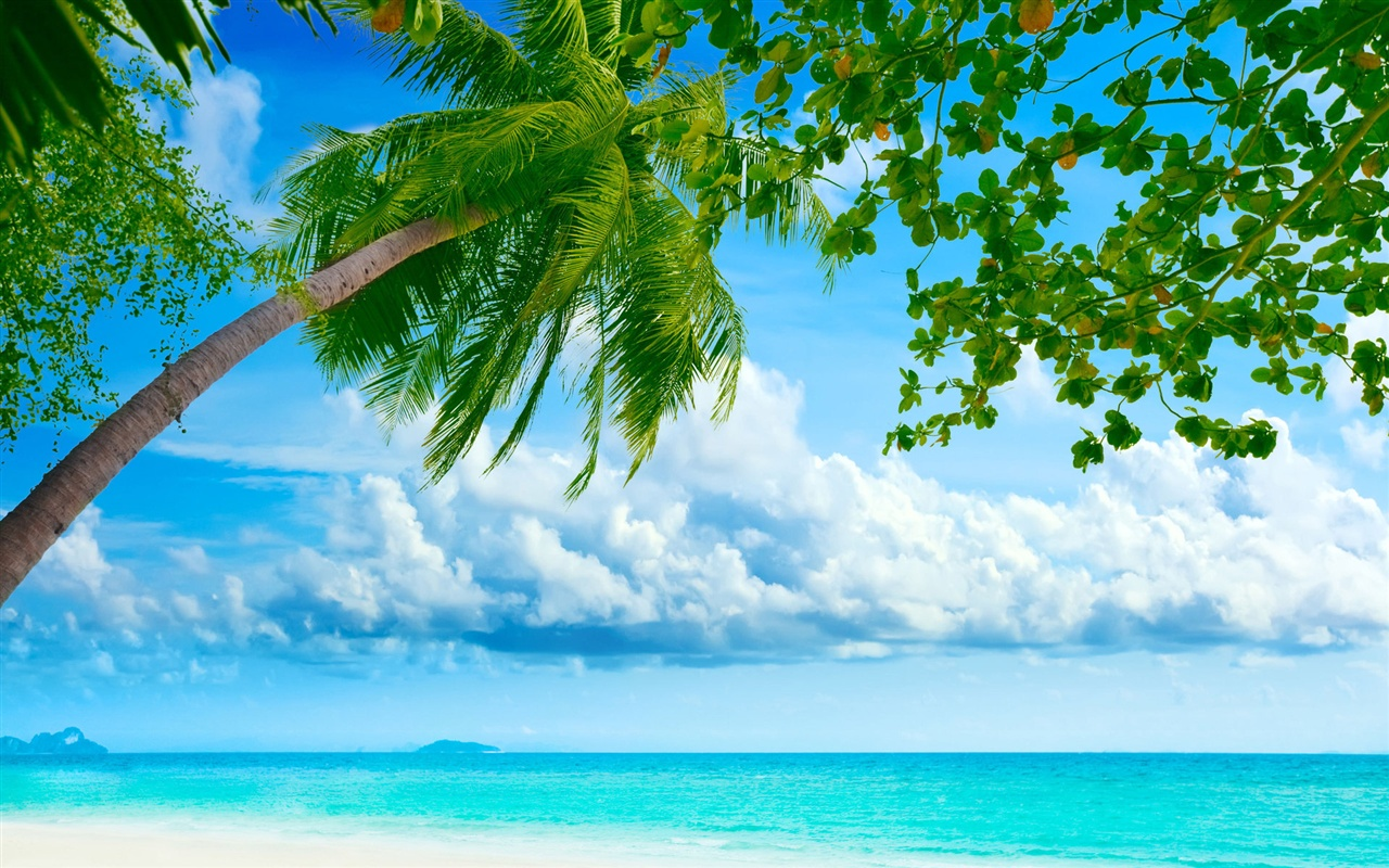 Ocean palm paradise wallpaper - 1280x800
