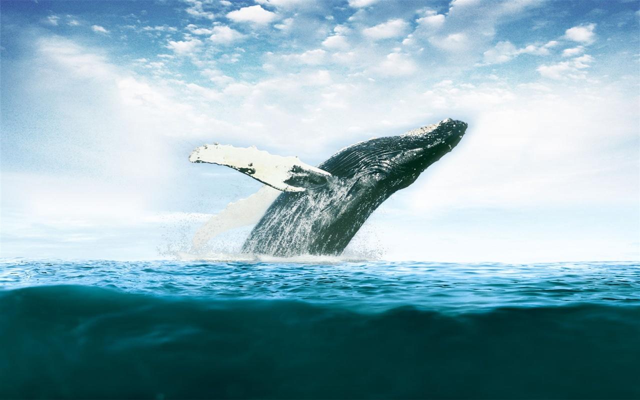 クジラの画像 p1_17
