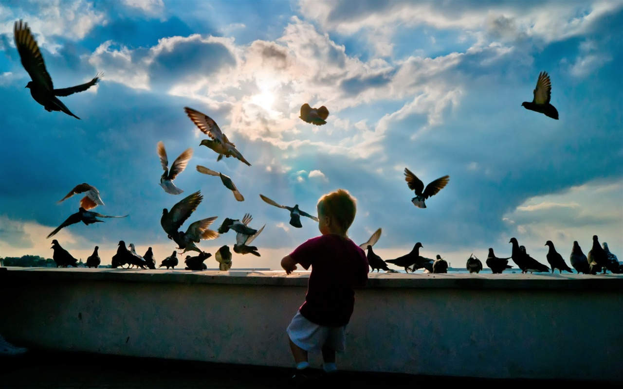Little boy with pigeons wallpaper - 1280x800