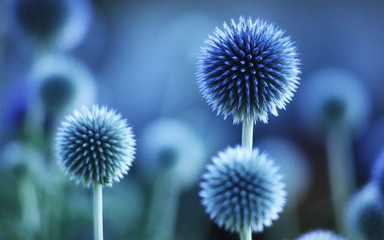 Flower plant blue mood wallpaper - 1280x800